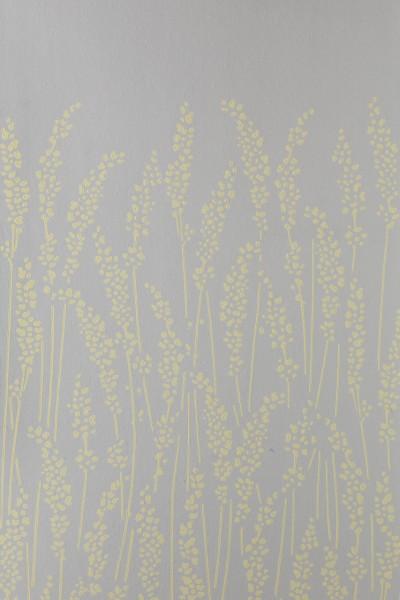 Feather Grass 5104
